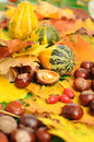 Autumn background with colorful leaves chestnuts hips and gourd Royalty Free Stock Images
