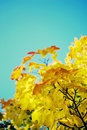 Autumn background with colourful leaves in vintage color