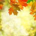 Autumn background falling leaves Royalty Free Stock Photo