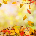 Autumn background falling leaves Royalty Free Stock Images