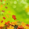 Autumn background falling leaves Stock Photos