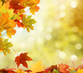 Autumn background falling leaves Stock Photography