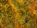 Autumn background with greens