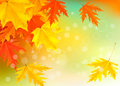 Autumn background with leaves. Back to school. Stock Image