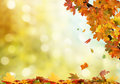 Autumn background leaves on colorful Royalty Free Stock Image