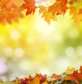Autumn background leaves on colorful Stock Photography