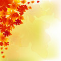 Autumn Background Leaves Falling Stock Photography