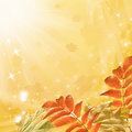Autumn background leaves on sunny abstraction Royalty Free Stock Image