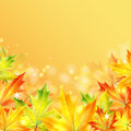 Autumn background maple leaves on a yellow sparkling Stock Images