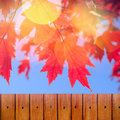Autumn background with red leaves and wooden fence Royalty Free Stock Photo