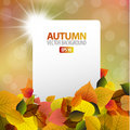 Autumn background with white card Royalty Free Stock Images