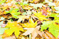 Autumn background (yellow abscissed leafs) Royalty Free Stock Photos