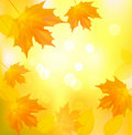Autumn background with yellow leafs. Stock Photo