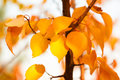 Autumn background for your design Royalty Free Stock Photos
