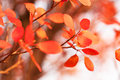 Autumn background for your design Royalty Free Stock Photography