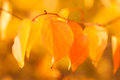 Autumn background for your design Stock Photos