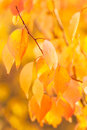 Autumn background for your design Stock Photography