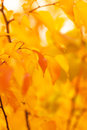 Autumn background for your design Royalty Free Stock Image