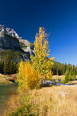 Autumn in Banff National Park Royalty Free Stock Photography