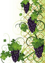 Autumn banner with grapes vector illustration Royalty Free Stock Photography