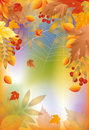 Autumn banner with spider web Stock Photos