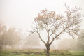Autumn bare tree in fog Royalty Free Stock Photo