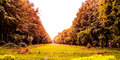 Autumn beautiful image with Royalty Free Stock Image