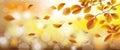 Autumn Beech Foliage Fall Sunlights Wind Header
