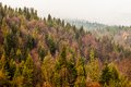 Autumn beskid mountain forest background poland Stock Photo