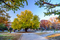 Autumn big trees in Tokyo University Stock Photography
