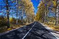 Autumn birch forest road a through the during Stock Photography