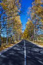 Autumn birch forest road a through the during Royalty Free Stock Photos