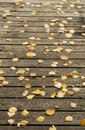 Autumn birch leaves and pine needles on a dark wooden terrace floor as background Royalty Free Stock Photography