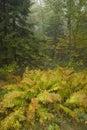 Autumn, Blue Ridge Parkway, NC Royalty Free Stock Photos