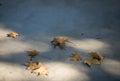 Autumn blues Royalty Free Stock Photo