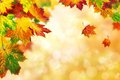 Autumn bokeh background bordered with leaves beautiful colorful maple shallow focus Stock Image