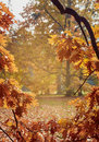 Autumn bokeh background bordered with leaves Royalty Free Stock Photo
