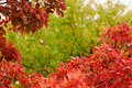 Autumn bokeh background bordered with red leaves Royalty Free Stock Photo