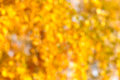 Autumn bokeh background fall of leaves in out of focus at apperture useful for photomontage Royalty Free Stock Photo