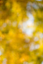 Autumn bokeh bright background natural beauty background Royalty Free Stock Photos