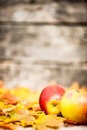 Autumn border from apples and leaves Royalty Free Stock Photography