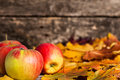 Autumn border from apples and maple leaves Royalty Free Stock Image