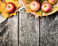 Autumn border from apples and yellow leaves Royalty Free Stock Image