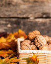 Autumn border from nuts Stock Photography