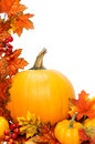 Autumn border vertical of pumpkins with red leaves over white Stock Photography