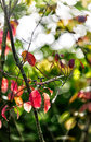Autumn boughs Royalty Free Stock Photo