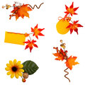 Autumn branch beautiful autmn brunches leaves and compositions Royalty Free Stock Photos