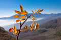 Autumn branch in mountains Stock Photo