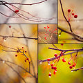 Autumn branches under rain Stock Photography