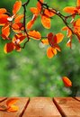 Autumn bright background with wooden surface. Yellow, red and orange leaves in a fabulous sunny autumn forest. Copy space. Royalty Free Stock Photo